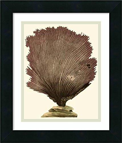 Framed Art Print 'Jewels of the Sea III' by Frederick P. Nodder - Nodder Jewels