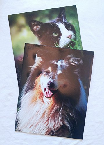 Set of 2 Graphic Portfolio Folders- Perfect for Back to School (Dogs & Cats) - Ses Cat