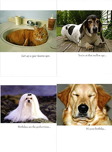 - WAY FUNNY WHO LET THE DOGS OUT BIRTHDAY CARD COLLECTION - 30 HILARIOUS CARDS - INCLUDES SOME CATS {jg} bassett, dalmation, terriers, labs, beagles, chihuahuas, dachshund, boxers, shepherd, bulldog
