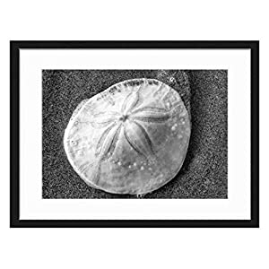 51-WqOq%2BV9L._SS300_ Best Sand Dollar Wall Art and Sand Dollar Wall Decor For 2020