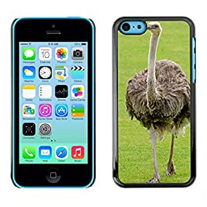 Hot Style Cell Phone PC Hard Case Cover // M00117236 Emu Ostrich Neck Bird Paw // Apple iPhone 5C