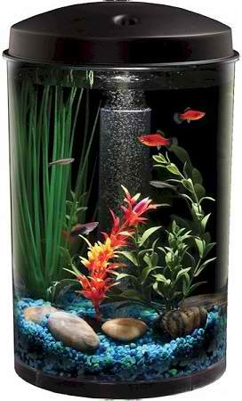 Fish & Aquatic Supplies Aquaview 3 Gallon 360 Aquarium by Hawkeye Aquariums