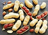 JUMBO VIRGINIA PEANUTS -GROW YOUR OWN PEANUTS GREAT FOR KIDS! ! EASY!
