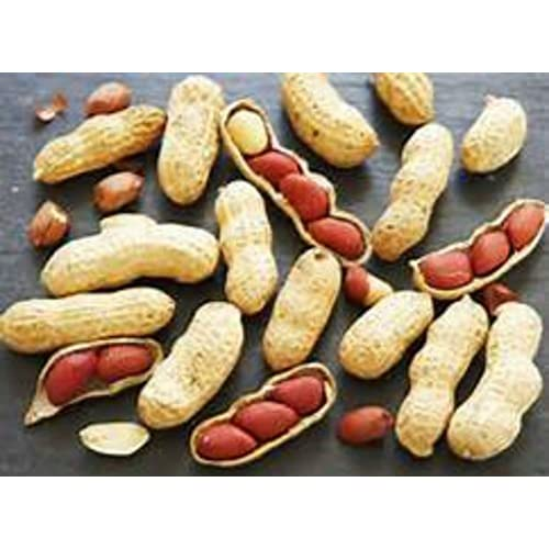 Discount JUMBO VIRGINIA PEANUTS -GROW YOUR OWN PEANUTS GREAT FOR KIDS! ! EASY! for cheap