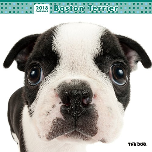 THE DOG Wall Calendar 2018 Boston Terrier
