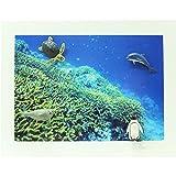 Midori Mini Magnet, Aquarium