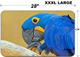 Luxlady Large Table Mat Non-Slip Natural Rubber Desk Pads ID: 40342947 Blue parrot at background Bali Bird Park Indonesia There is copy space for tex