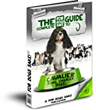 All About Cavalier King Charles Spaniels