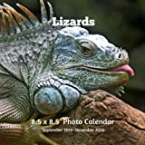 Lizards 8.5 X  8.5 Photo Calendar September 2019 -December 2020: Monthly Calendar with U.S./UK/ Canadian/Christian/Jewish/Muslim Holidays- Nature Lizards Amphibians