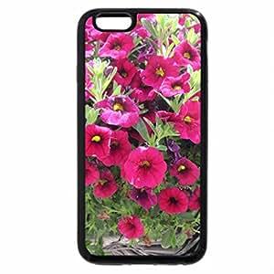 iPhone 6S Plus Case, iPhone 6 Plus Case, Flowers in Hanging Basket 08
