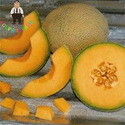 20pcs Super Big Sweet Honey-dew Melon Seeds Hami Melon Fruit Seeds Heirloom Succulent Plants Cantaloupe Sementes For Garden . Purple