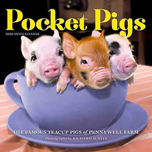 Pocket Pigs Mini Wall Calendar 2020 (Mini Wall Calendar Kids)