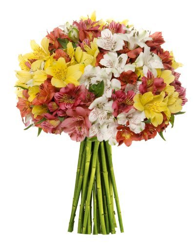 - Premium Alstromeria Peruvian Lilies by Eflowerwholesale (100 blooms)