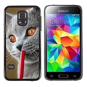 TopCaseStore / la caja del caucho duro de la cubierta de protección de la piel - Blue British Shorthair Siberian Cat - Samsung Galaxy S5 Mini, SM-G800, NOT S5 REGULAR!