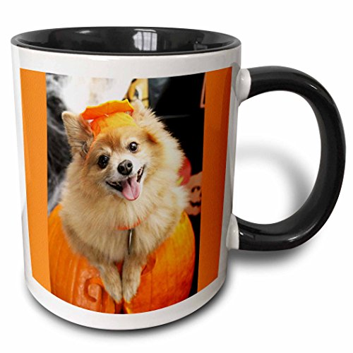 3dRose RinaPiro - Halloween - Halloween dog. Puppy dressed in Halloween costume. - 15oz Two-Tone Black Mug -