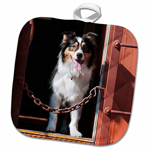 3drose-danita-delimont-dogs-australian-shepherd-in-a-train-car-8x8-potholder-phl-230324-1