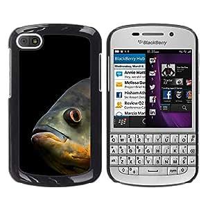 Qstar Arte & diseño plástico duro Fundas Cover Cubre Hard Case Cover para BlackBerry Q10 ( Fish Sea Underwater Scuba Diving Black)