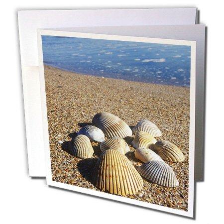 3dRose Seashells, Jacksonville, St. Johns River, Florida - US10 GJO0234 - Greg Johnston - Greeting Cards, 6 x 6 inches, set of 6 (gc_89152_1)