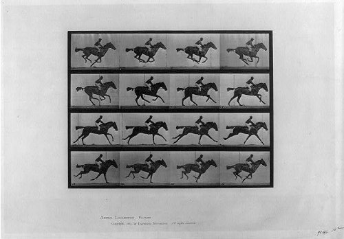 Muybridge Eadweard Horse Galloping (Photo: Animal locomotion,16 frames of racehorse 'Annie G.' galloping,Eadweard Muybridge)