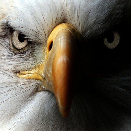 (Eagle Bone Whistle)