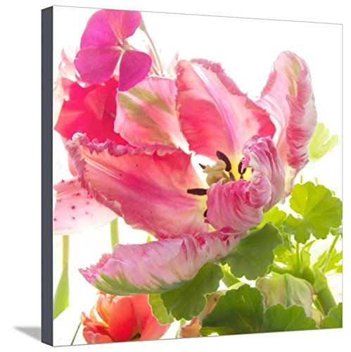 Parrot Tulip One by Judy Stalus, Canvas Wall Art
