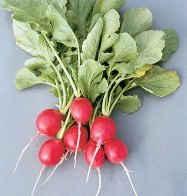 David's Garden Seeds Radish Cherriette D2145 (Red) 200 Hybrid Seeds