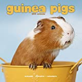 Guinea Pig Calendar - Cute Animal Calendar - Calendars 2018 - 2019 Wall Calendars - Animal Calendar - Guinea Pigs 16 Month Wall Calendar by Avonside