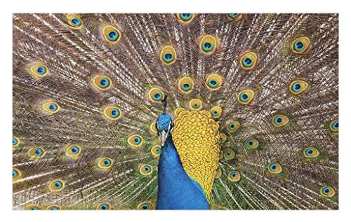 Lunarable Peacock Doormat, Peacock Displaying Feathers Vibrant Colors Eye Shaped Patterns Picture, Decorative Polyester Floor Mat with Non-Skid Backing, 30 W X 18 L inches, Mustard Blue Brown (Peacock Feathers Displaying)