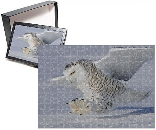 Photo Jigsaw Puzzle of Snowy Owl - in (Snowy Owl Photo)