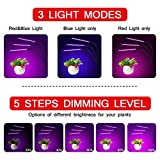 Elvira Grow Light Auto ON/Off,30W LED Full Spectrum Grow Lamps with 3/6/12H Timer,5 Dimmable Levels,3-Head Divide Control Adjustable Gooseneck Clip-on Desk Plant Lights for Indoor
