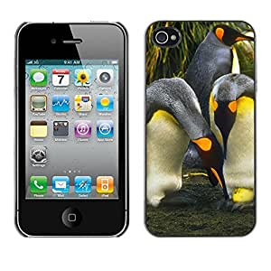 Print Motif Coque de protection Case Cover // V00002698 Pingüinos con Huevo // Apple iPhone 4 4S 4G