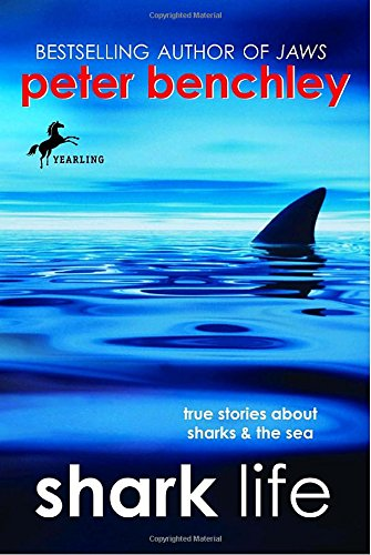 red sea sharks - 9