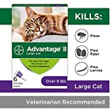 Flea Prevention for Cats Over 9 lbs - 6 Pack - Advantage II