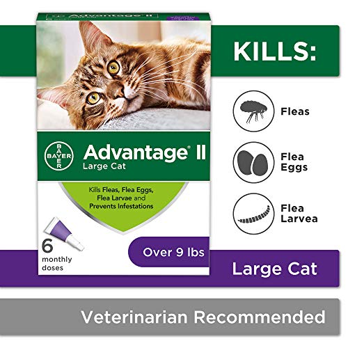 Flea Prevention for Cats Over 9 lbs, 6 Pack, Advantage II (Best Stuff To Kill Fleas)