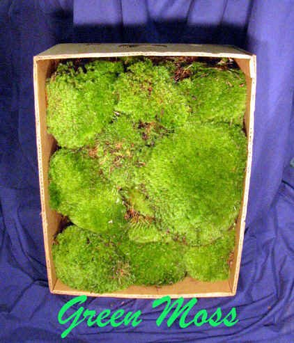 Mood Moss bulk Big 1.5 cubic foot box