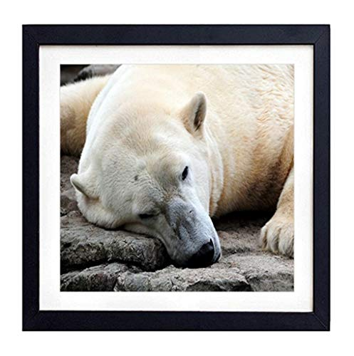 GLITZFAS PRINTS Framed Wall Art - Polar Bear Resting Thick - Art Print Black Wood Framed Wall Art Picture for Home Decoration - 20
