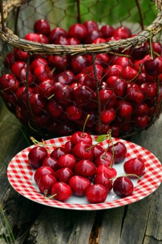 - Basket of Fresh Picked Cherries Journal: Take Notes, Write Down Memories in this 150 Page Lined Journal