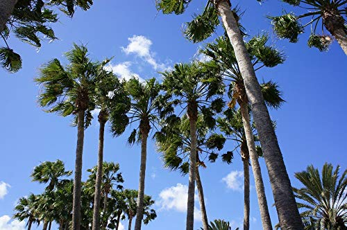 Home Comforts Canvas Print Palm Trees Canary Islands Sky Vivid Imagery Stretched Canvas 32 x 24