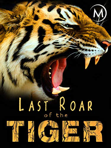 Last Roar of the Tiger ()