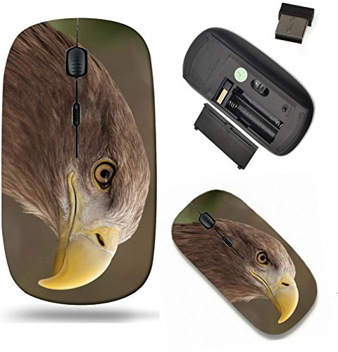 Liili Wireless Mouse Travel 2.4G Wireless Mice with USB Receiver, Click with 1000 DPI for notebook, pc, laptop, computer, mac book IMAGE ID: 39164266 portrait of an european eagle -