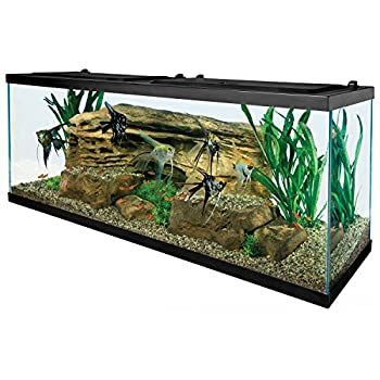 Tetra 55 Gallon Aquarium Kit with Fish Tank Fish Net Fish Food Filter Heater and Water Conditioners