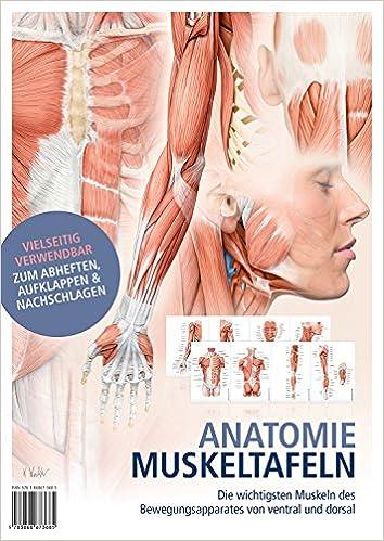 Anatomie-Muskeltafeln: Die wichtigsten Muskeln des ...