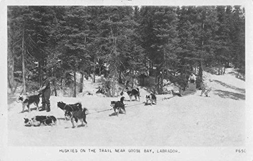 (Goose Bay Labrador Canada Huskies Dog Team Real Photo Antique Postcard J57566 )