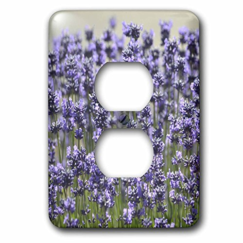 3dRose  lsp_57259_6 Field of Lavender Flowers Romantic Gardens Floral Print 2 Plug Outlet Cover (Floral Cover Outlet)