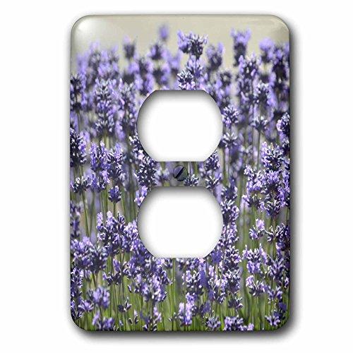 3dRose  lsp_57259_6 Field of Lavender Flowers Romantic Gardens Floral Print 2 Plug Outlet - Cover Outlet Floral