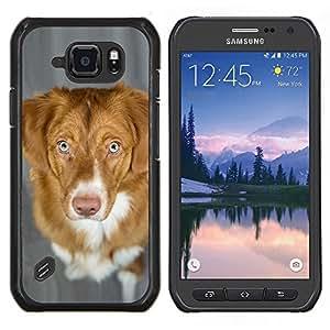 Pato de Nueva Escocia Perro perdiguero tocante del perro- Metal de aluminio y de plástico duro Caja del teléfono - Negro - Samsung Galaxy S6 active / SM-G890 (NOT S6)