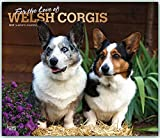 For the Love of Welsh Corgis 2019 14 x 12 Inch Monthly Deluxe Wall Calendar with Foil Stamped Cover, Animal Dog Breeds Corgi