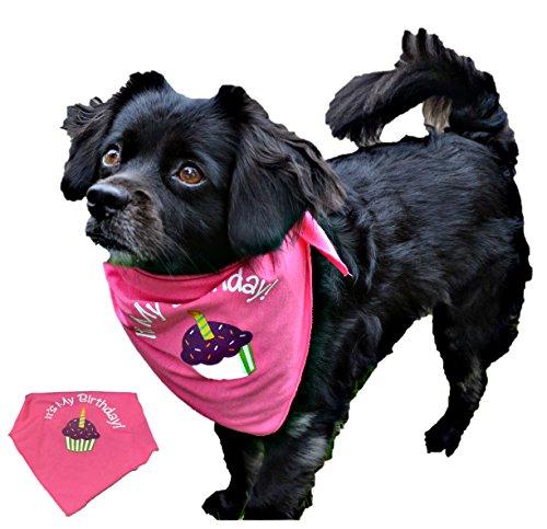 (Pawsome Doggie Birthday Bandana for Dog (XL, Pink))