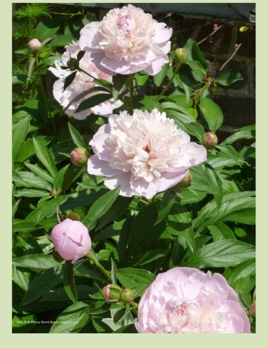 Pale Pink Peony Blank Book Lined 8.5 X 11: 8.5 by 11 inch 100 page lined blank book suitable as a journal, notebook or diary with a cover photo of pale pink peonies pdf