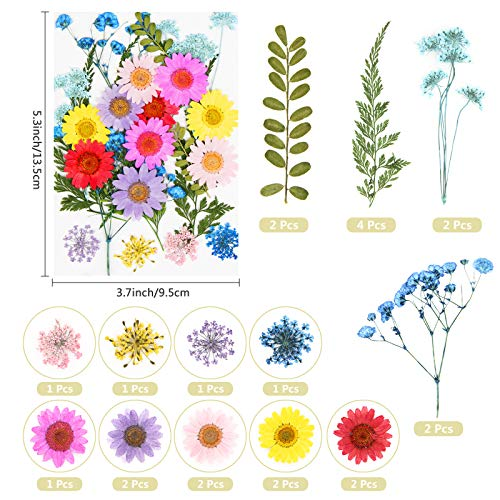 Real Dried Pressed Flowers and Leaves - 73pcs Mixed Multiple Dry Flower and Leaf with Tweezer for DIY Candel Resin Jewelry Nail Pendant Crafts Art Floral Decoration